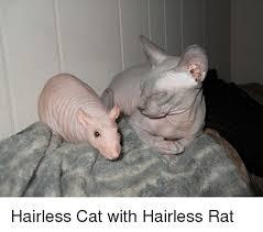 Hairless Cat Meme - cat and cat meme on me me
