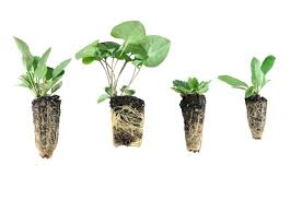 nursery native plants products