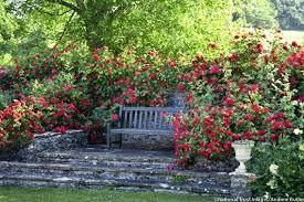 Fall Garden Plants Texas - gardening in austin u2013 exhort me