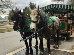 Stanley Park Stanleypark Liv Twitter by Stanley Park Horse Drawn Tours In Vancouver Writing Horseback