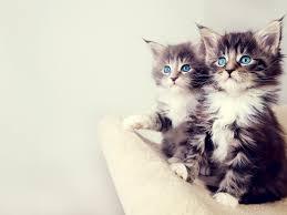 cute kittens wallpaper download wallpaper nature free