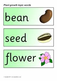 plant growth primary teaching resources and printables sparklebox
