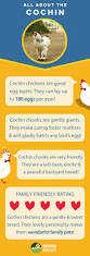 best 25 cochin chickens ideas on pinterest hens bantam
