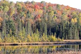 Caledon Forest Map Fall Colour Report Algonquin Provincial Park The Friends Of