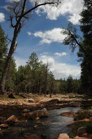 Christmas Tree Permits Colorado Buffalo Creek by Arizona Hiking 5 2 10 5 9 10