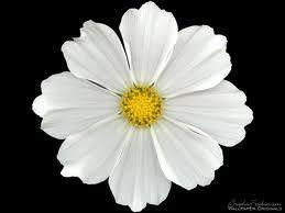 white flower 163 best i like white flowers images on white