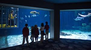 Zoo Lights Tacoma Wa by Tacoma Aquarium Offers Dive With Sharks The Spokesman Review