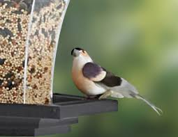 provide food and water for birds