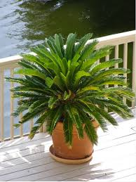 plant u0027s poisonous to dogs central florida attention dog