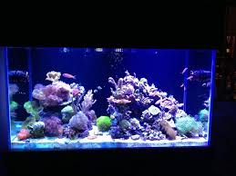 Saltwater Aquascaping 873 Best Reef Tanks Images On Pinterest Reef Aquarium Saltwater