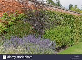 victorian garden walls victorian walled garden in autumn with vines and perennial plants