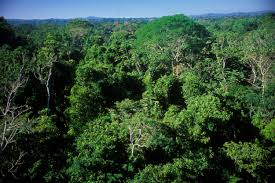 canopy amazon uncontacted tribes should we leave them alone time