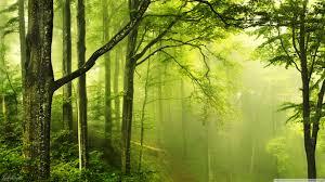 beautiful green forest 4k hd desktop wallpaper for 4k ultra hd