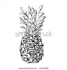 drawing pineapple stock vector 493730269 shutterstock