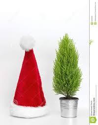 santa hat and little christmas tree stock image image 35526361