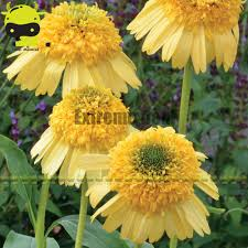 popular easy care plants buy cheap easy care plants lots from
