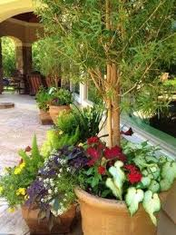 best 25 houston landscaping ideas on pinterest repel mosquitos