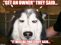Annoyed Dog Meme - annoyed dog memes imgflip