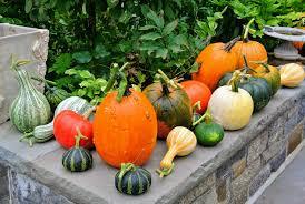picking pumpkins at the farm the martha stewart blog