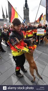 belgian shepherd us army belgian shepherd dogs stock photos u0026 belgian shepherd dogs stock
