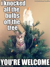 Cat Christmas Meme - oh christmas tree cat uploaded by shockya on we heart it