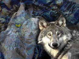 spirit halloween mn halloween wolves pics free wolf spirit wallpaper download the