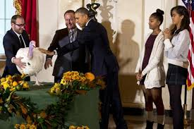 obama pardons turkeys in thanksgiving tradition ny daily news