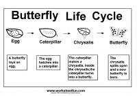 life cycle free printable worksheets u2013 worksheetfun