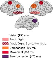 timing the brain mental chronometry as a tool in neuroscience