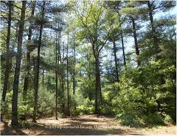 Massachusetts travel blogs images A nature walk at massasoit state park top ten travel blog our jpg