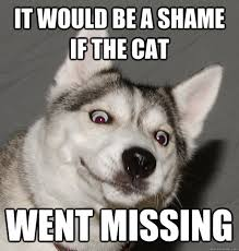 Funny Husky Memes - i really like dogs 3 cute pinterest dog memes memes and dog