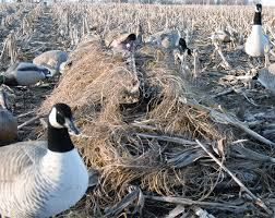 prairiewind decoys killerweed layout blind kit by avery outdoors