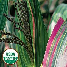 japonica organic corn seed savers exchange