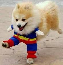 Chihuahua Halloween Costumes Funny Halloween Costume Ideas Dogs Halloween Costumes 2017