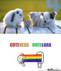 Cuteness Overload Meme - cuteness overload by tectonn meme center