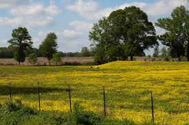Mississippi scenery images The 14 country roads in mississippi have amazing scenery jpg