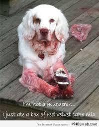 Murderer Meme - 26 i m not a murderer dog meme pmslweb