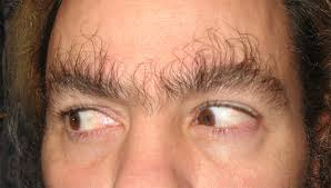 Bushy Eyebrows Meme - i see your long eyebrow hair and raise you well take your pick wtf