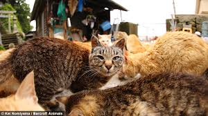 cat island cat heaven japan s cat island where felines outnumber humans six