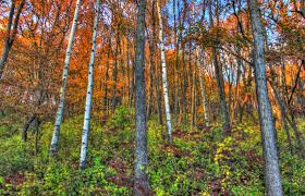 Wisconsin Forest images Tall trees in the forest in perrot state park wisconsin image jpg