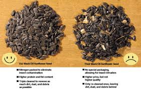 wild bird seeds drs foster u0026 smith black oil sunflower seed