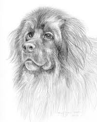 sketching with pencil painting puppies