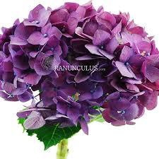 bulk hydrangeas purple hydrangeas bulk hydrangeas
