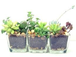 Best Flowers For Office Desk Best Desk Plants Best Plant For Office Desk Plants Ideas On Decor
