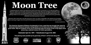 wyoming michigan moon tree