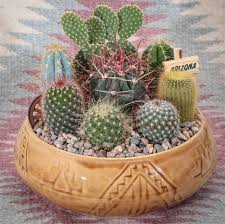 southwest cactus garden 9 inch decorate your home or office