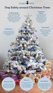 dog safe christmas trees when santa meets the health u0026 safety