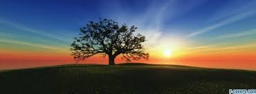 sun set tree cover timeline photo for fb