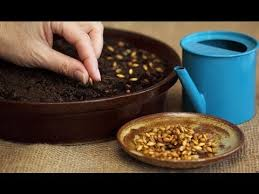 how to plant flower seeds seeds planting tips youtube