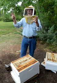 the buzz local resources can help urban beekeepers get started